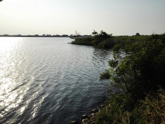 小貝川 福岡堰 鯉 ソウギョ 釣り