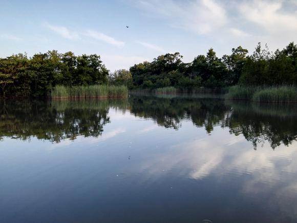 鯉釣り つくば 池 パンプカ