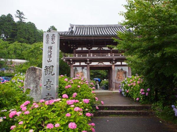 P7020016ajisai.jpg