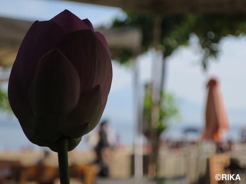 lotus3-08/01/17