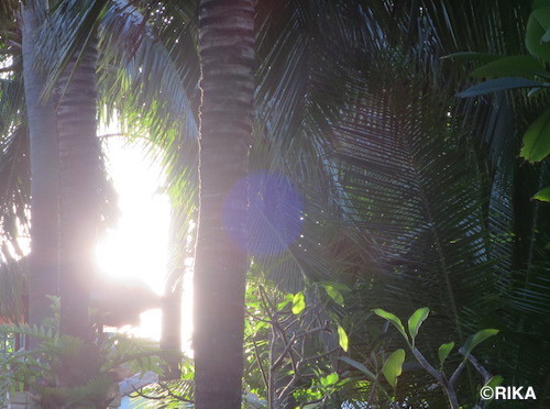 sunlight28/03/17