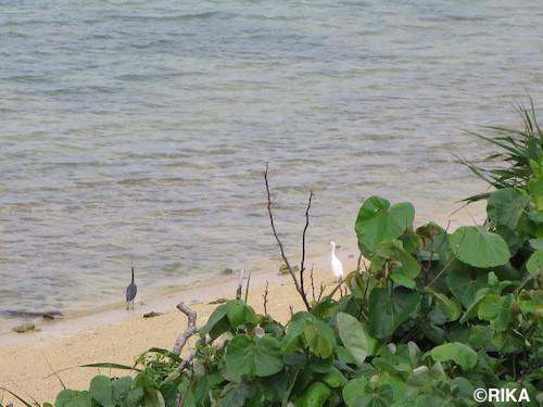 bird1-02/05/17