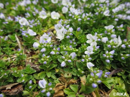 flower2-12/05/17