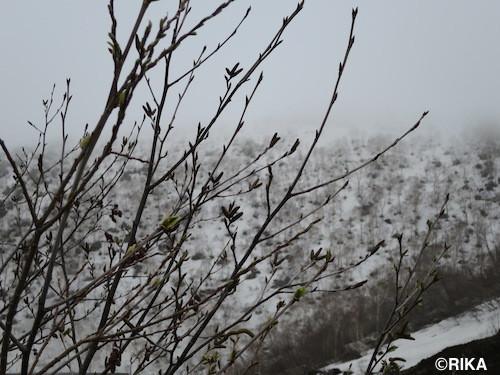 snow4-13/05/17