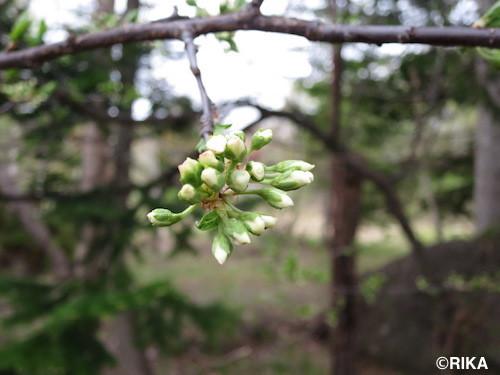 sakamoto1-13/05/17