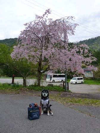 須賀谷温泉朝のお散歩22