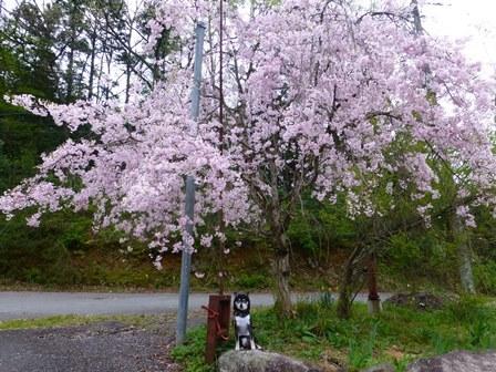 須賀谷温泉朝のお散歩23