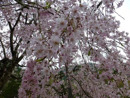 須賀谷温泉朝のお散歩24