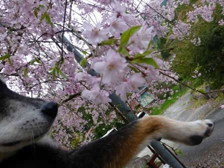 須賀谷温泉朝のお散歩25