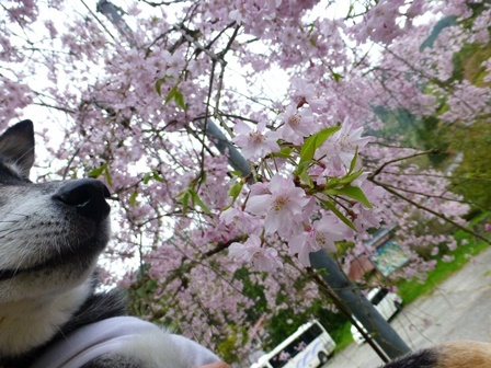 須賀谷温泉朝のお散歩26