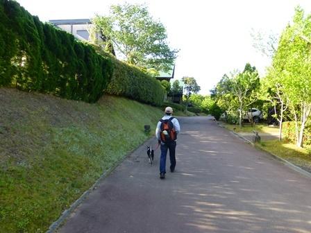 フィオーレ志摩朝のお散歩13