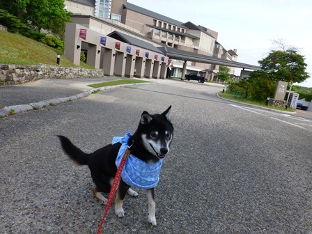 アクアヴィラ朝のお散歩 (55)