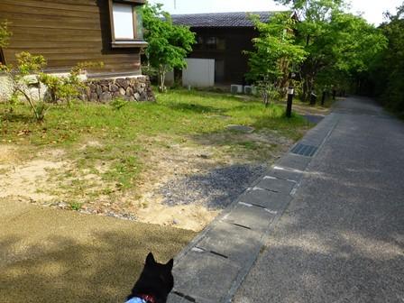 アクアヴィラ朝のお散歩 (57)