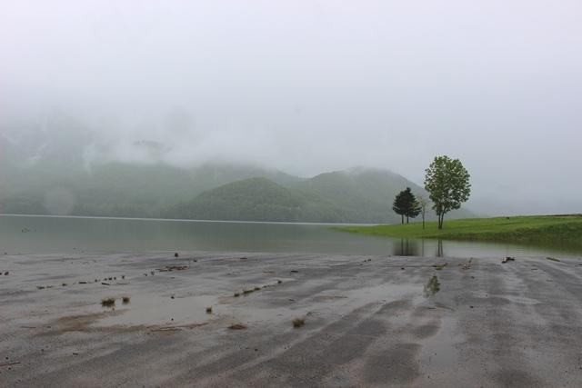鮮やかな雨