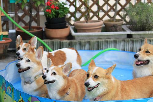 みんなでプール☆