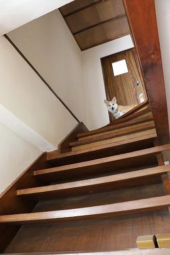 4階に上がっちゃった
