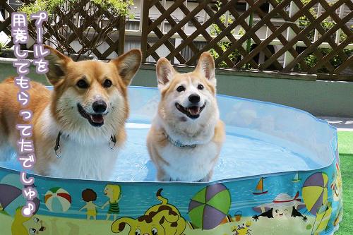 プールを用意してもらったでしゅ