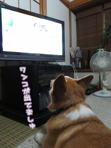 テレビを観始めた