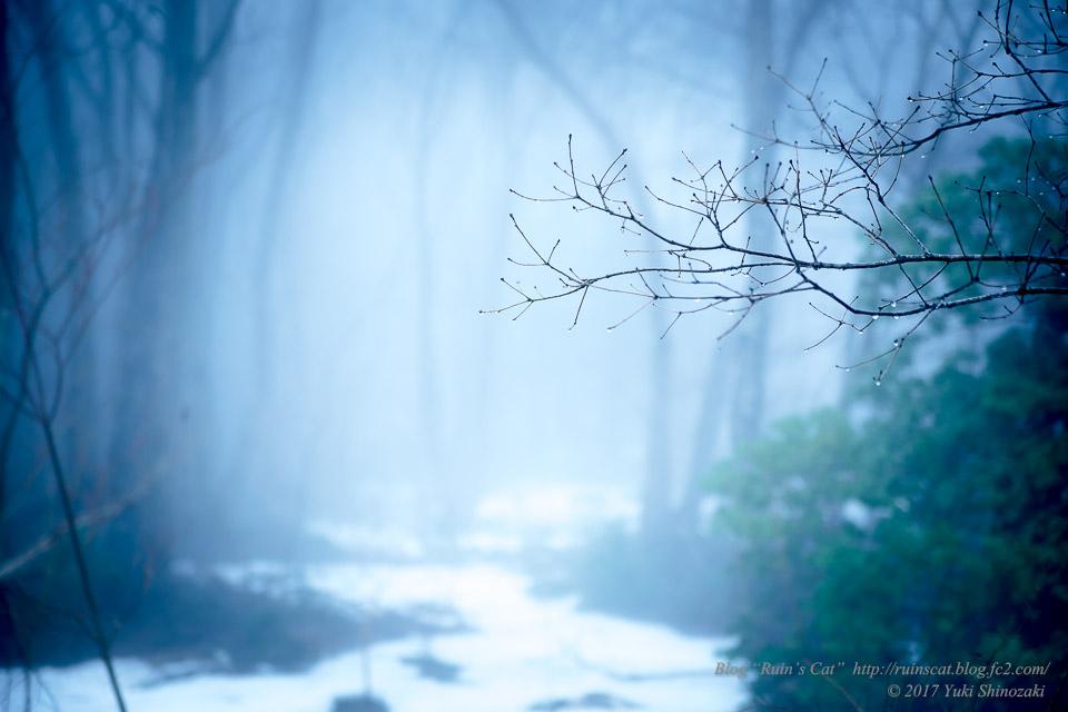 【廃墟】萬治キノコ牧場_霧の森