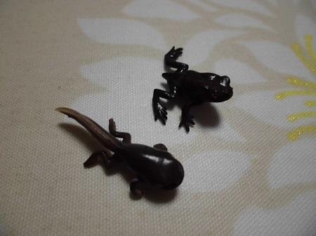 ガチャ:ヒキガエルとアマガエル5