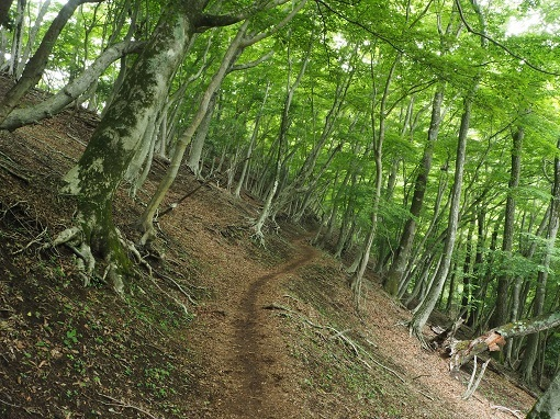 ゴーラ沢までの森