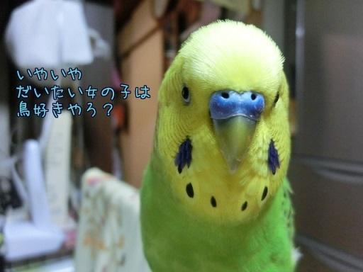 だいたい鳥好き