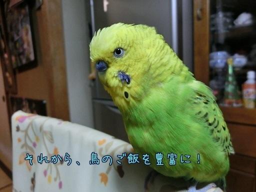鳥のご飯豊富に