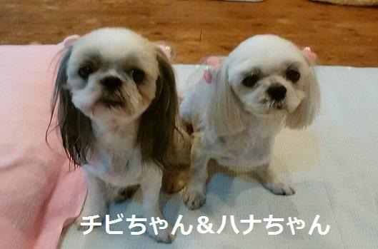 チビちゃん&ハナちゃん