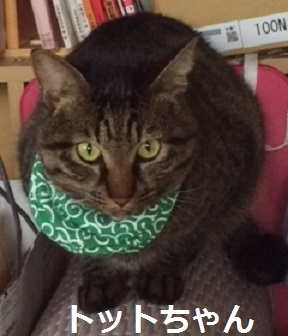 トットちゃん キジ猫