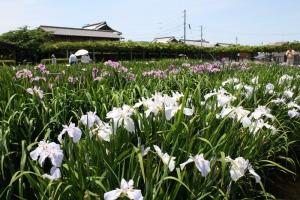 17川津浄水場3