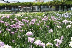 17川津浄水場6