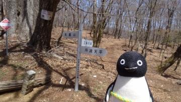 20170430-雲取山 (69)