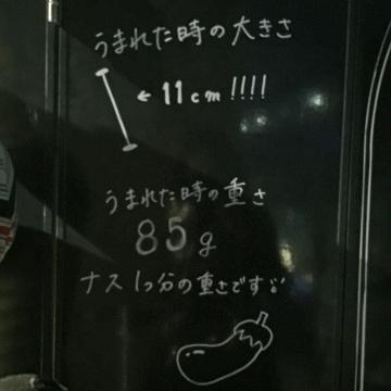 20170507-すみだ水族館 (13)