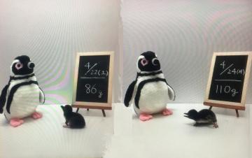 20170507-すみだ水族館 (11 12)-加工