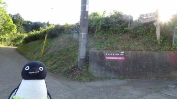 20170505-丹沢 (48)