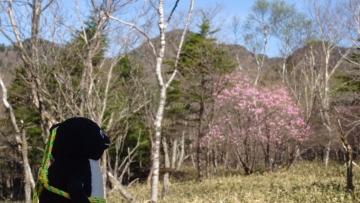 20170521-袈裟丸山 (9)