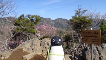 20170521-袈裟丸山 (12)