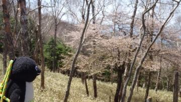 20170521-袈裟丸山 (24)