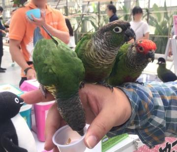 20170617-掛川花鳥園 (66)-加工