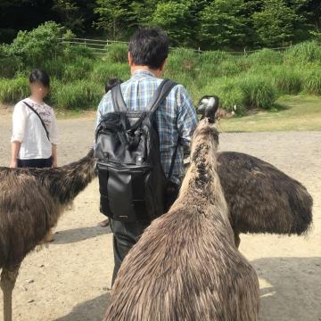 20170617-掛川花鳥園 (107)-加工
