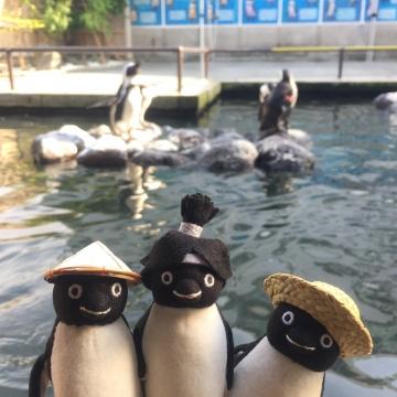 20170617-掛川花鳥園 (119)
