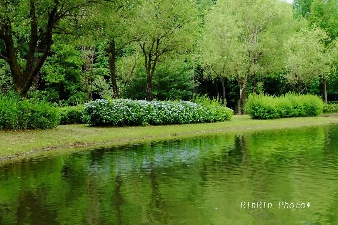 彩の森入間公園の水辺