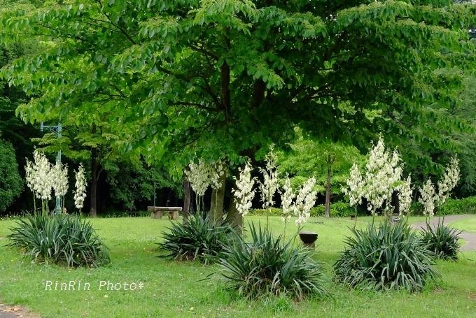 彩の森入間公園ユッカ