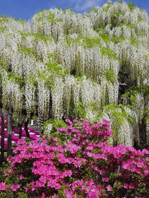1680_ashikaga.jpg