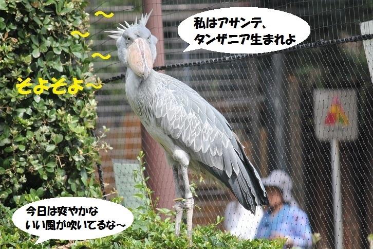 51 - コピー