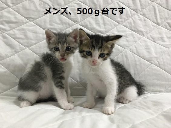 170531001.jpg