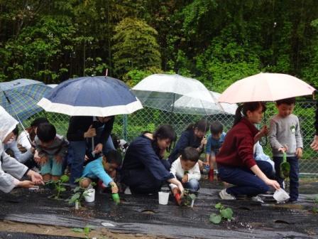 野菜苗植え1