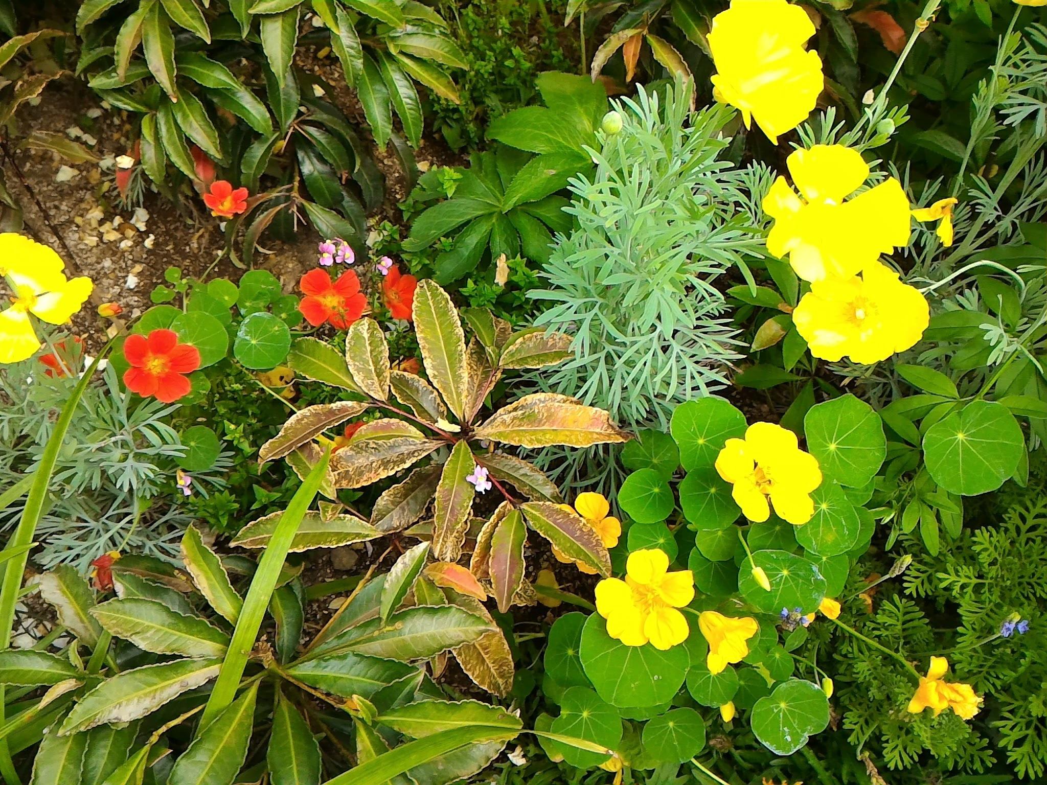 モネの花壇