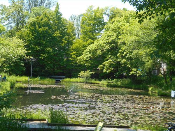 北大構内の池