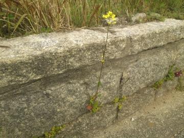 岩鬼っぽい花
